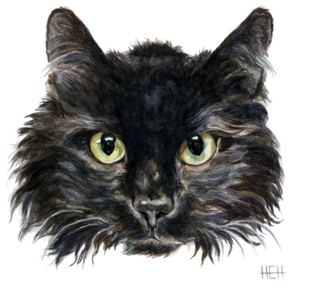 Cat 4 copy.jpg