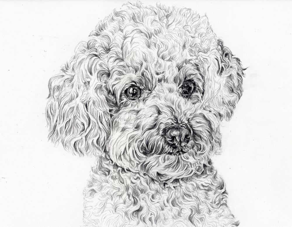 goldie sketch copy.jpg