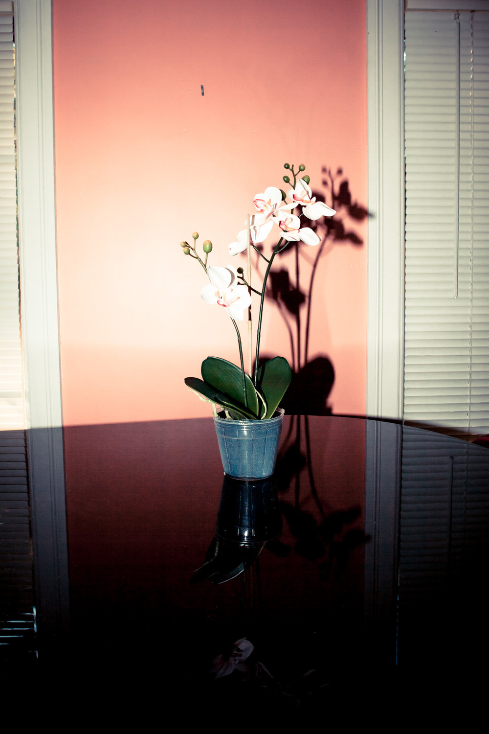 121510_Fake Orchid_0013-Edit-2-72.jpg