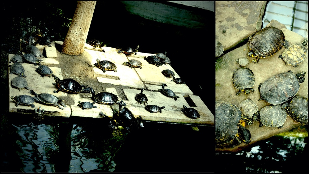 Massive turtle pond and breeding ground inside the train station.