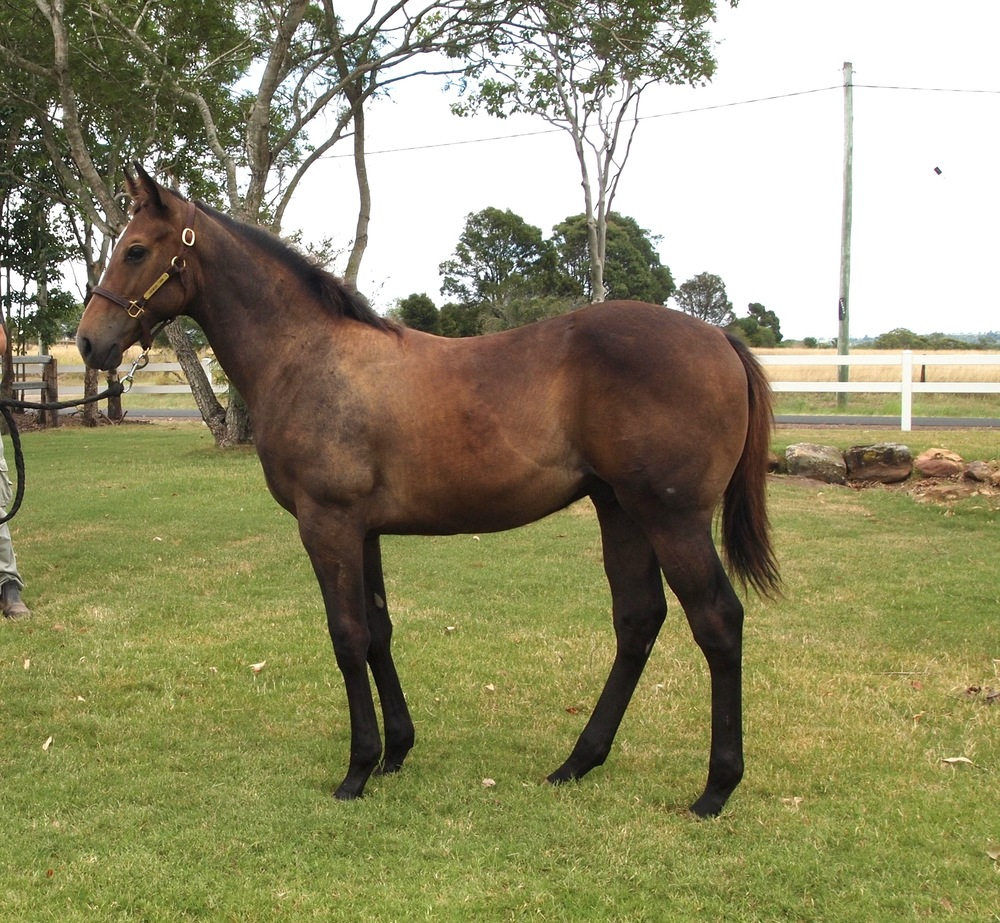TOP ECHELON – IDESA BAY weanling colt