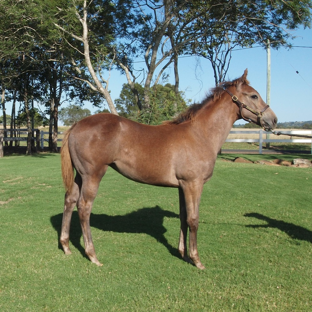 Top Echelon – MISS CAROLION weanling filly.