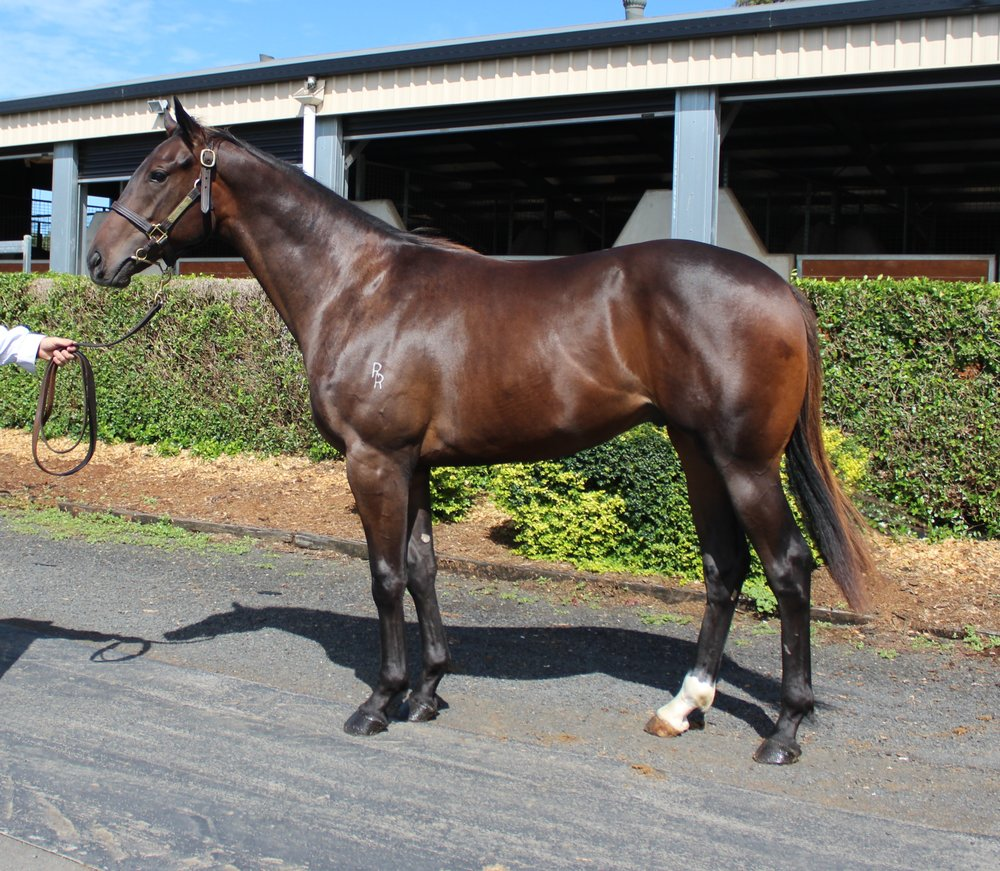 Lot 151 - Better Than Ready x Sale Eve