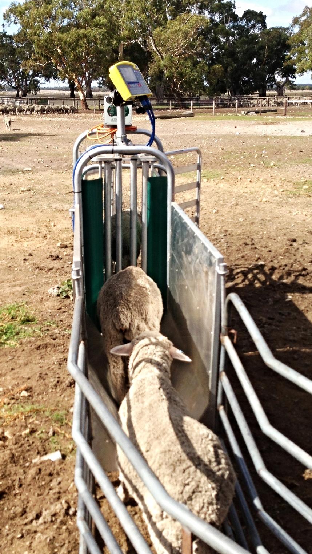 Lamb autodrafter AgriPartner