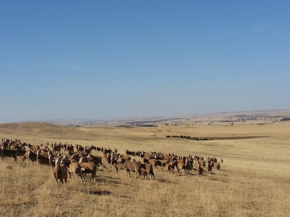 November 2015 pasture sampling at Hill River