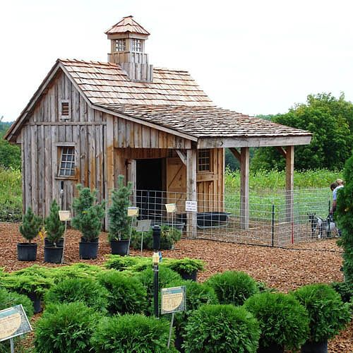 Congratulations Here S A Chicken Coop Boxwood Avenue