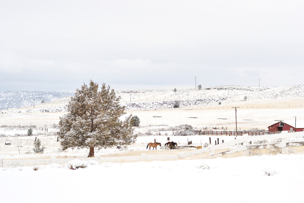 Beautiful snowy ranch of Boxwood Avenue
