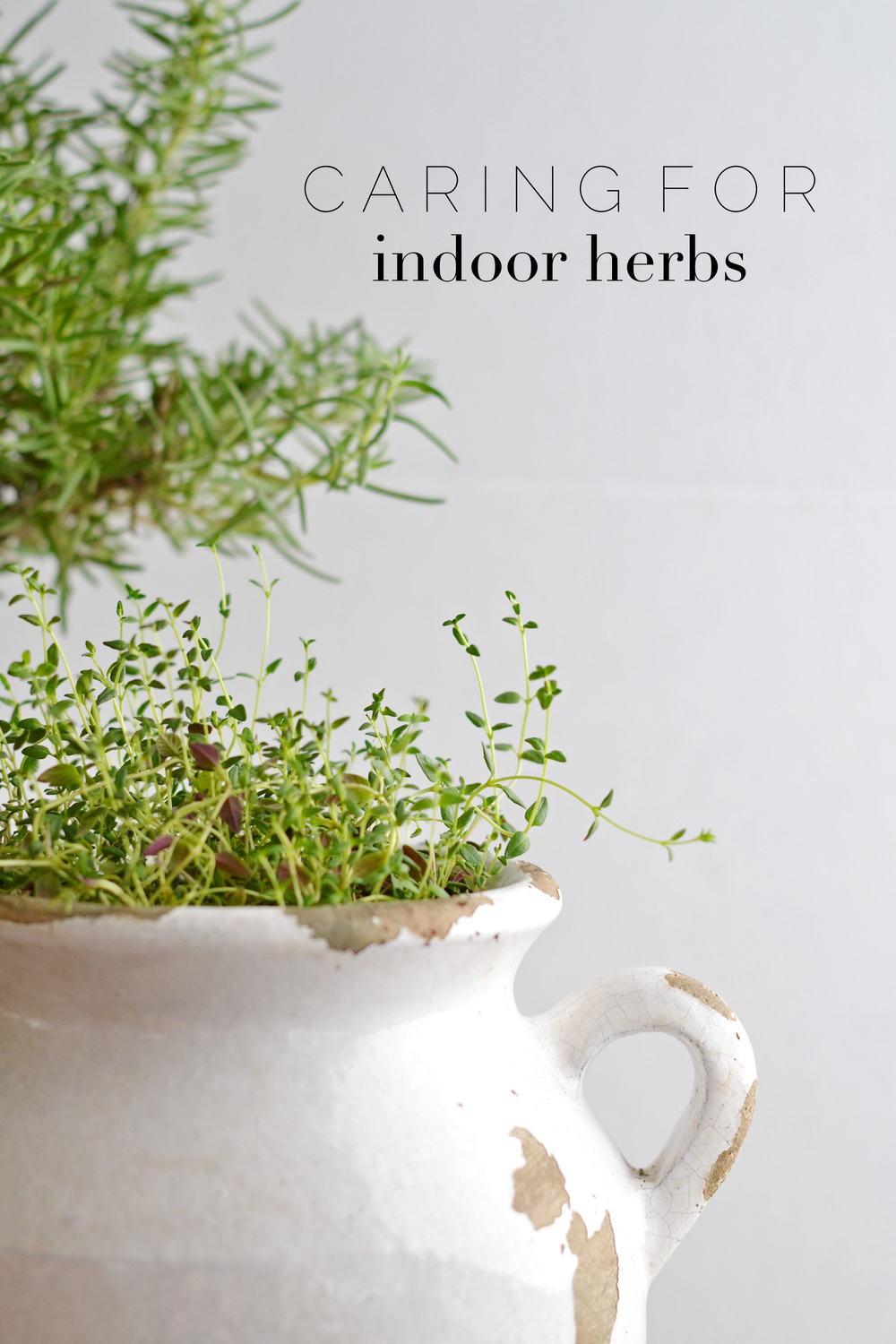 Tips for taking care of indoor herbs from Boxwoodavenue.com