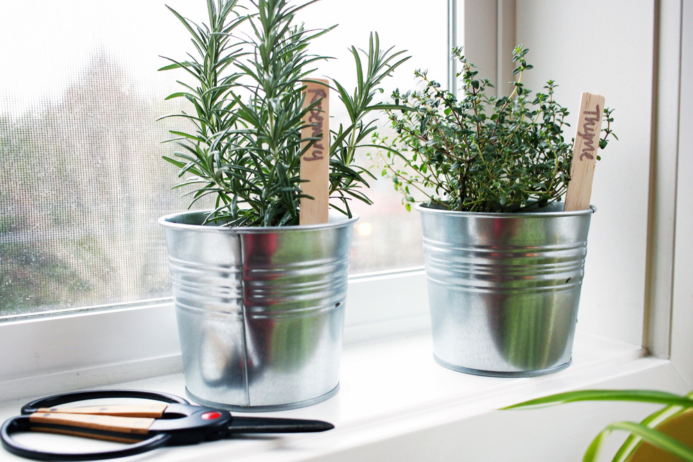 Tips for caring for indoor herbs by Pretty Lovely Studios on BoxwoodAvenue.com