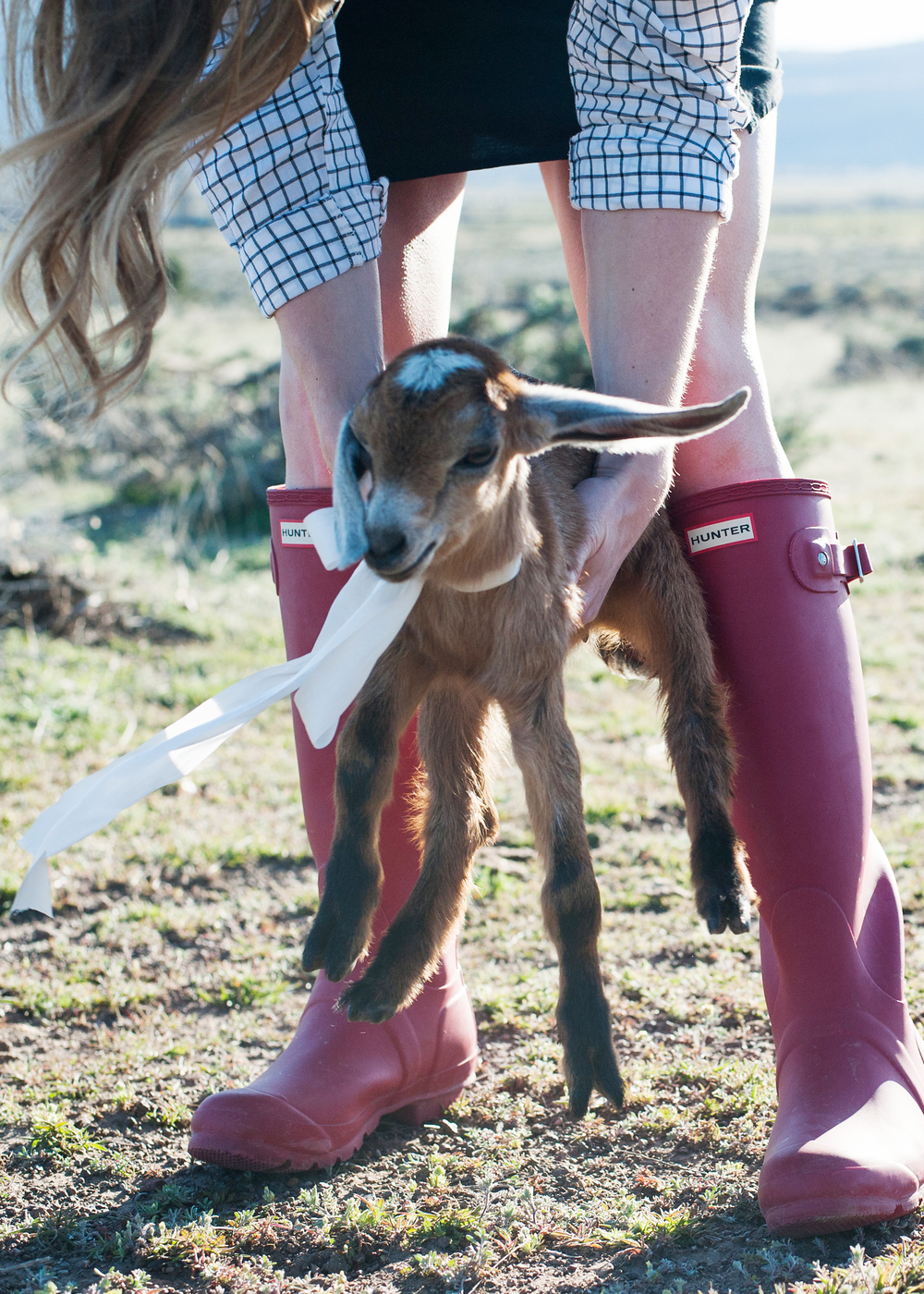 Baby goat with a ribbon & red hunter boots - so cute! boxwoodavenue.com | Carrie Richards Photography