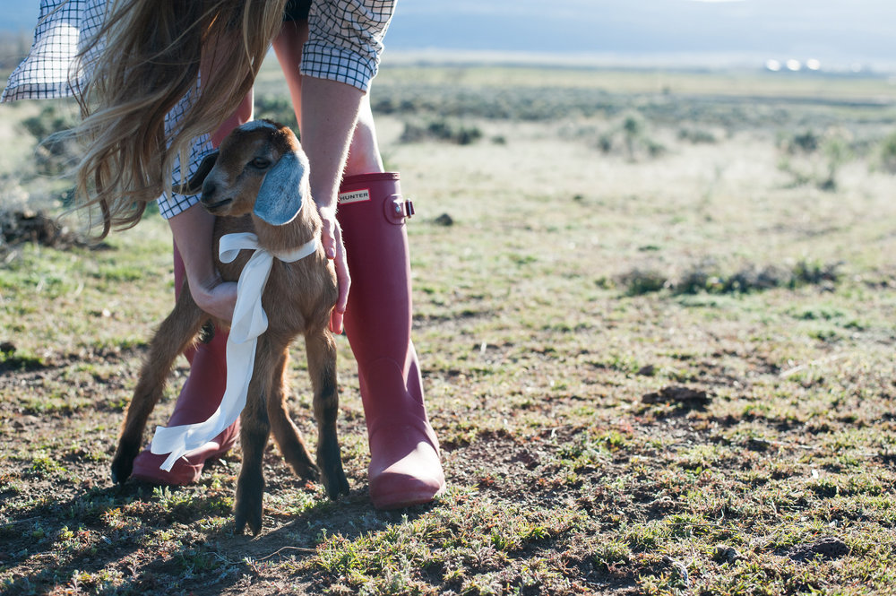 Coccidiosis in goats - prevention & treatment. | boxwoodavenue.com [Carrie Richards Photography]