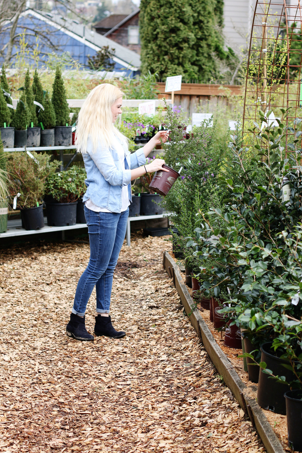 How To Choose Plants For Your Garden From Boxwoodavenue.com | Floral  Mountains