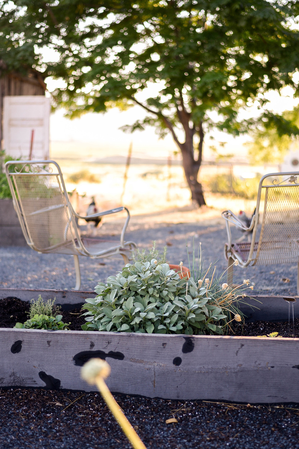 What To Plant This Summer For A Fall And Winter Vegetable Garden!  Boxwoodavenue.com