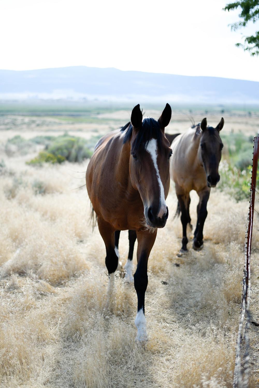 horses | boxwoodavenue.com