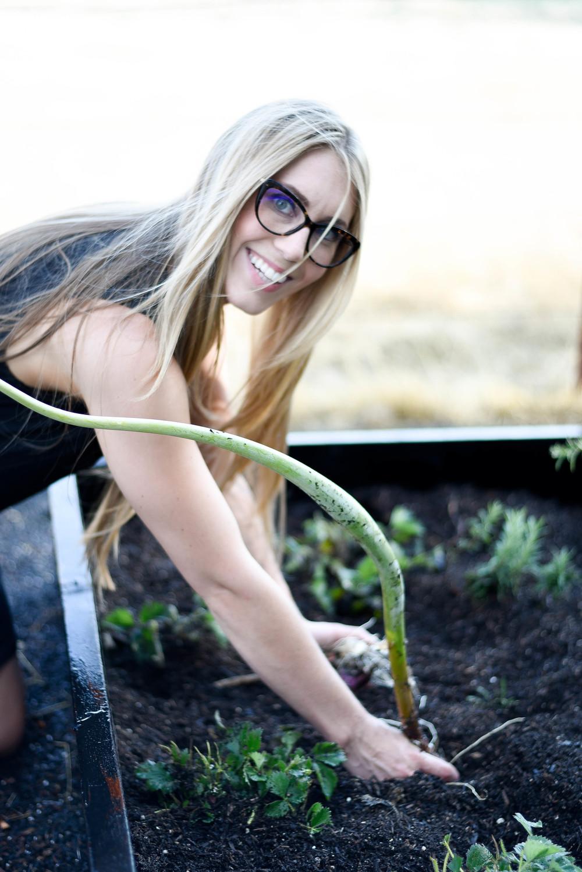 garden harvest | boxwoodavenue.com