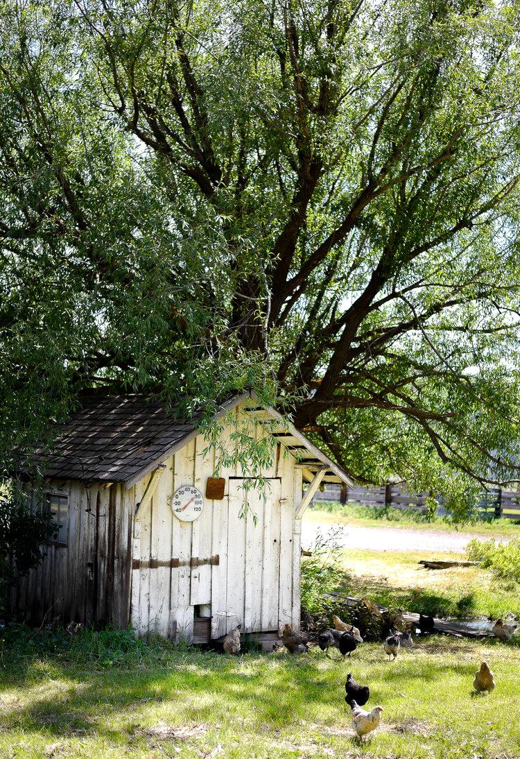 12 Beautiful Outdoor Storage Sheds — Boxwood Avenue