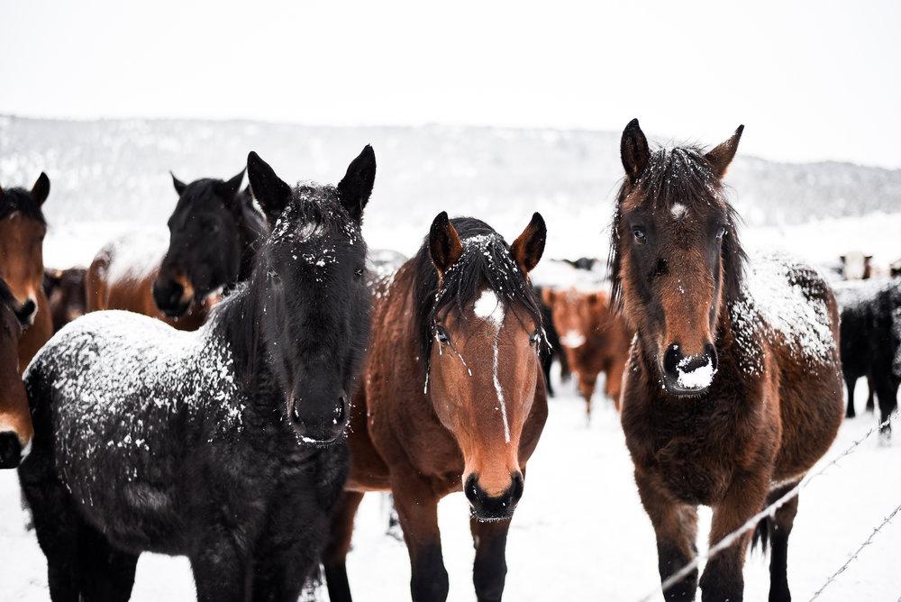 Frosty horses in Jess Valley, Ca | boxwoodavenue.com