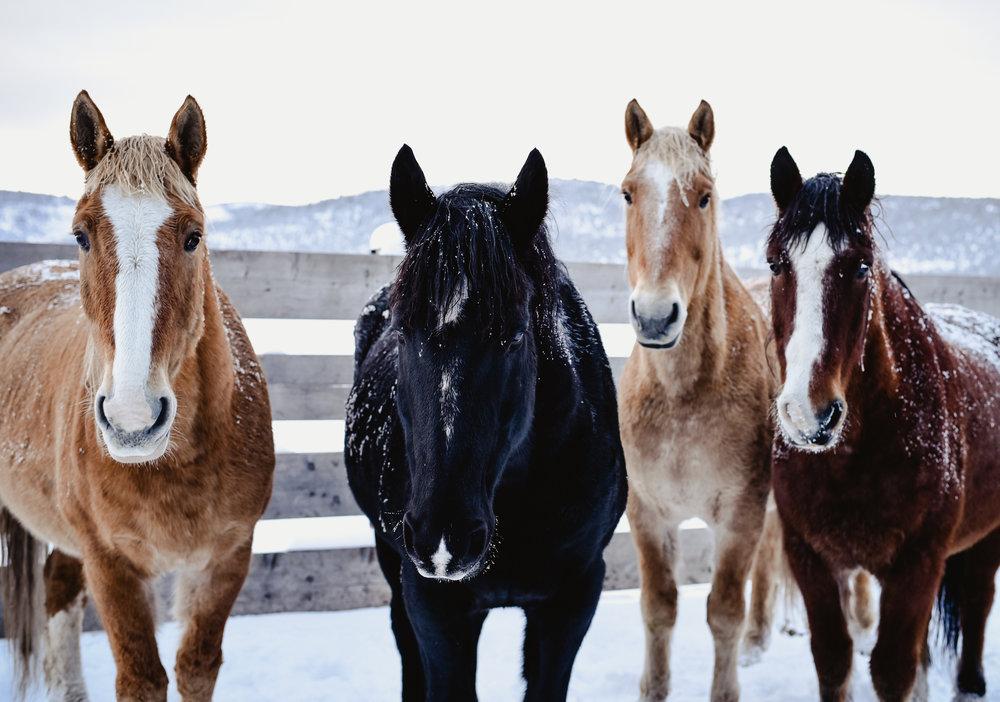 Snowy horse ranch photos | boxwoodavenue.com