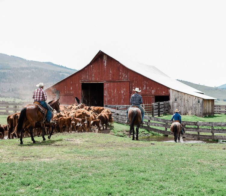 Cattle branding working grass-fed beef ranch in northern California | boxwoodavenue.com