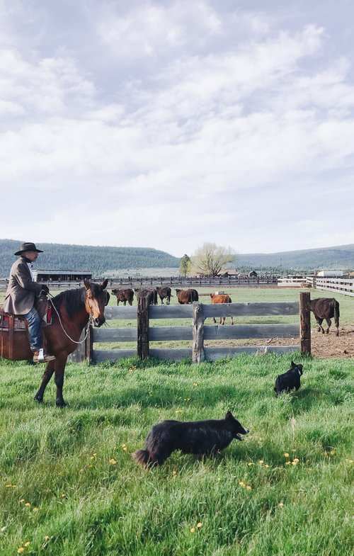 working cattle ranch northern california | boxwoodavenue.com