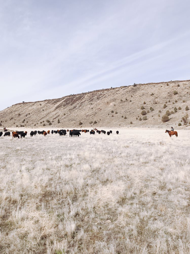 Cattle Drives | boxwoodavenue.com