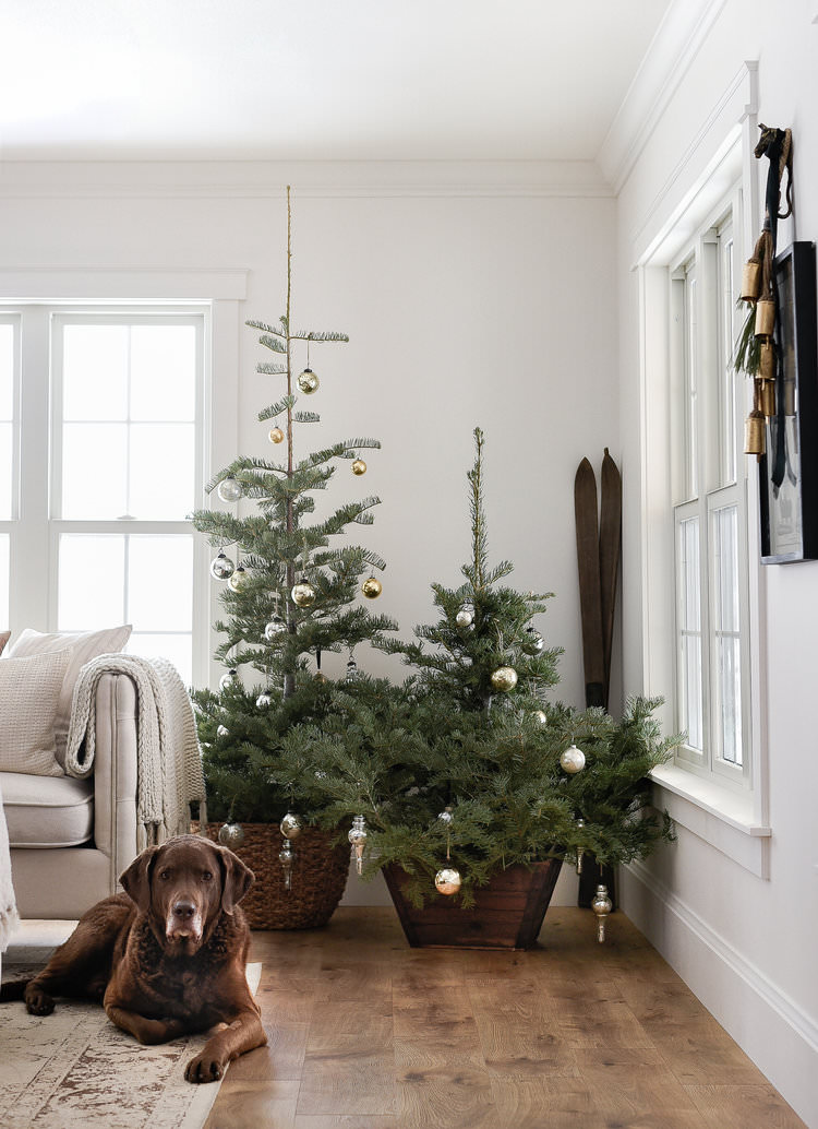 Simple farmhouse Christmas decorating • boxwoodavenue.com