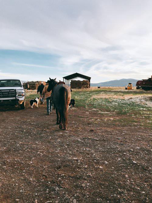 Cattle Ranch in Northern California | boxwoodavenue.com