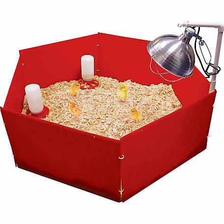 How to raise chicks - boxwoodavenue.com