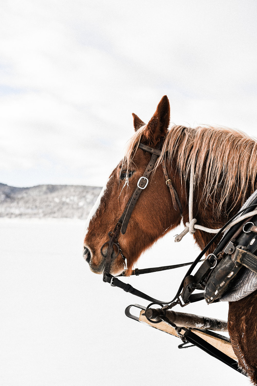 Winter Working Teamster Horse Cattle Ranch Equestrian Photography | boxwoodavenue.com