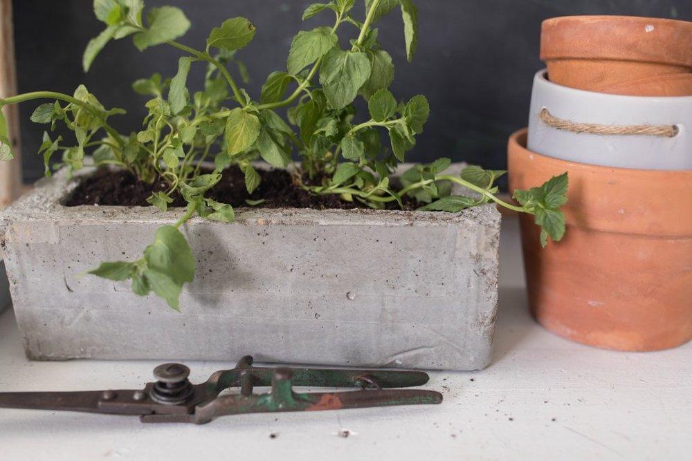 DIY Concrete Planted Farmhouse on boone