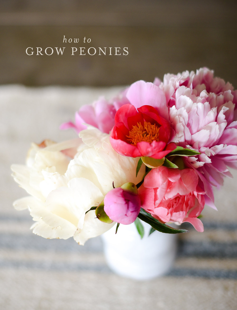 Growing peonies in a cut flower garden with free download for gardening success! boxwoodavenue.com #peonies #growingpeonies #flowergarden #gardening