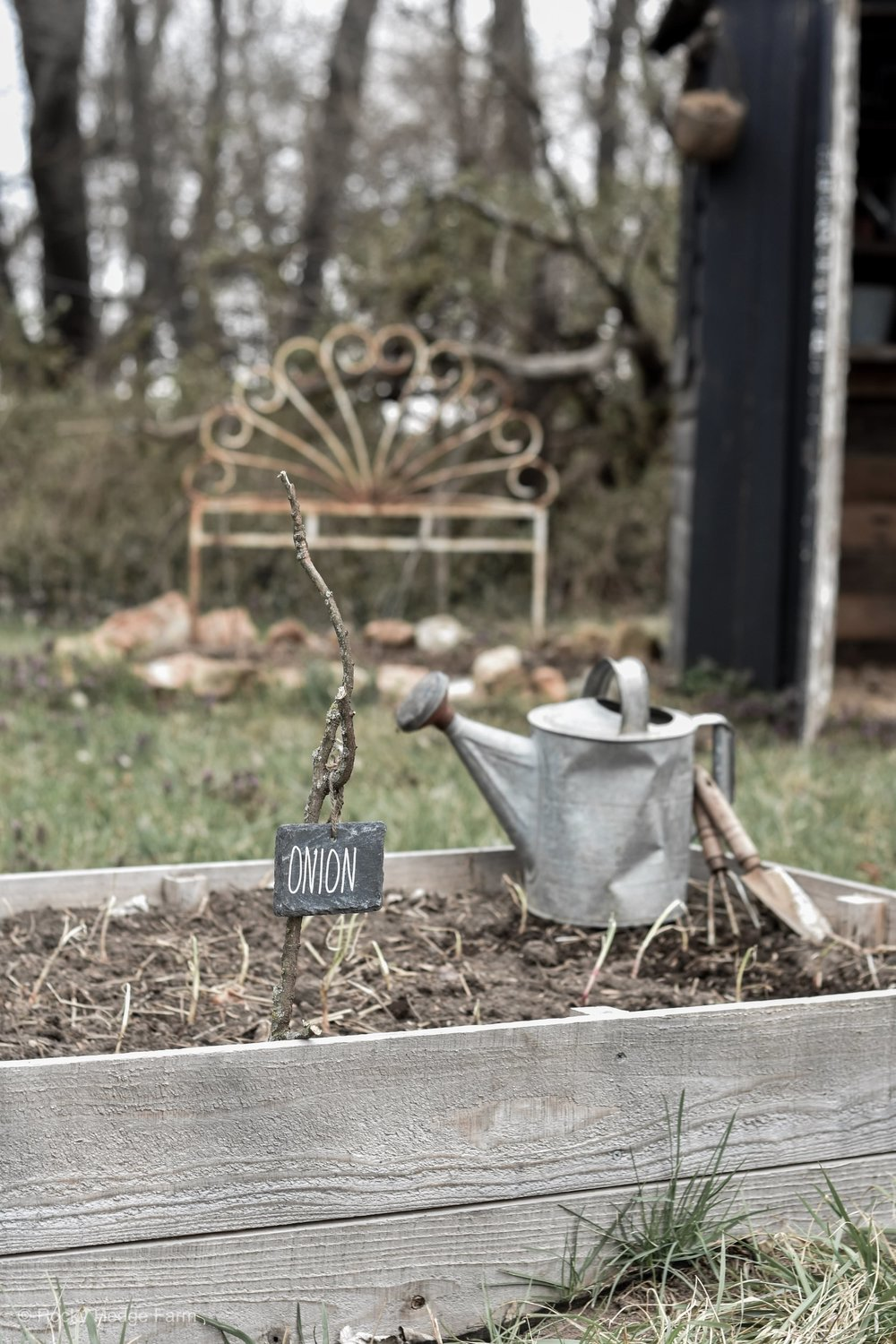 A simply guide for how to plant and grow onions from scratch! Rocky Hedge Farm