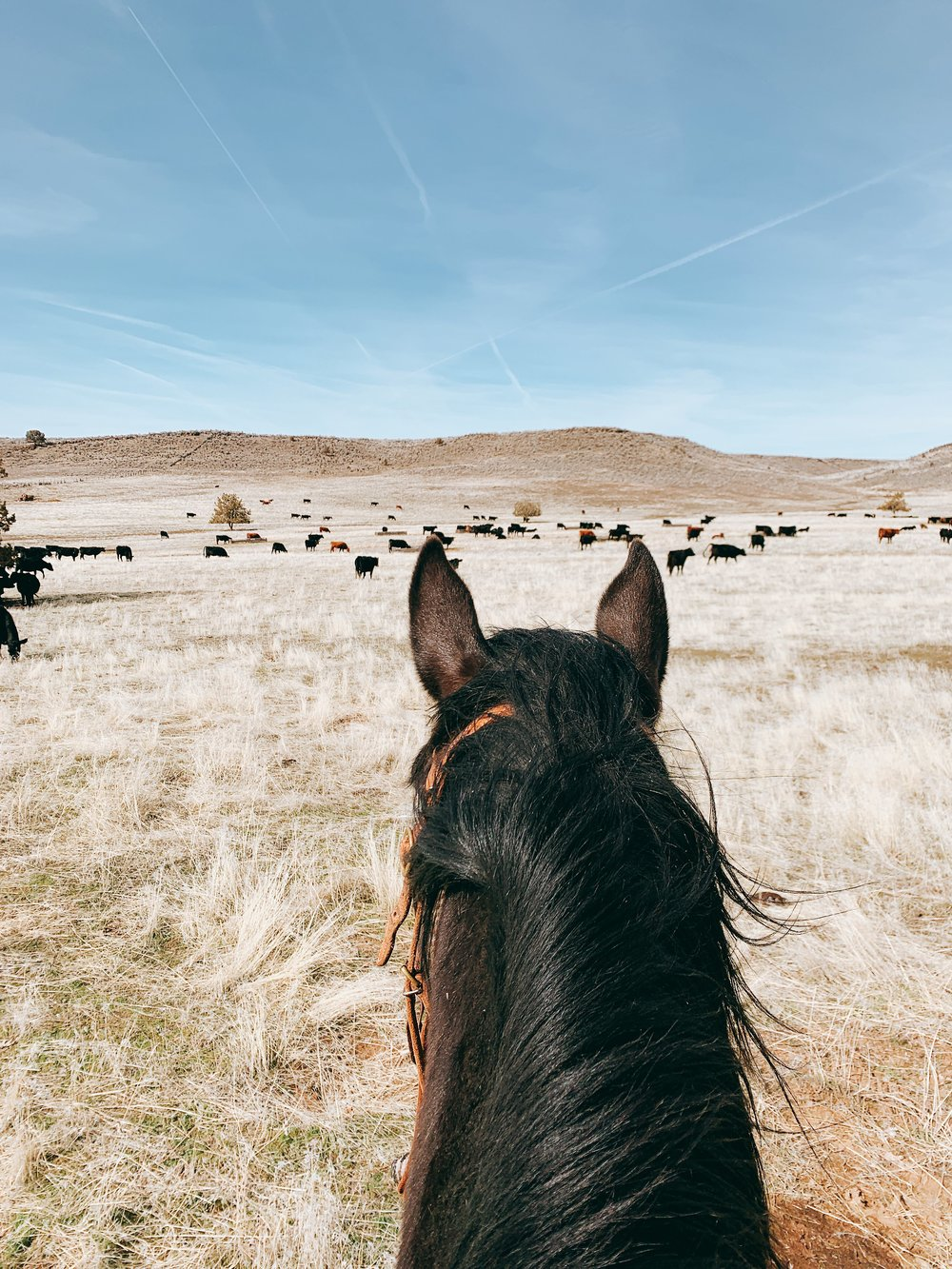 Cattle Ranch in Northern California - western lifestyle and authentic farmhouse living | boxwoodavenue.com #horses #cattle #ranching #farmlife