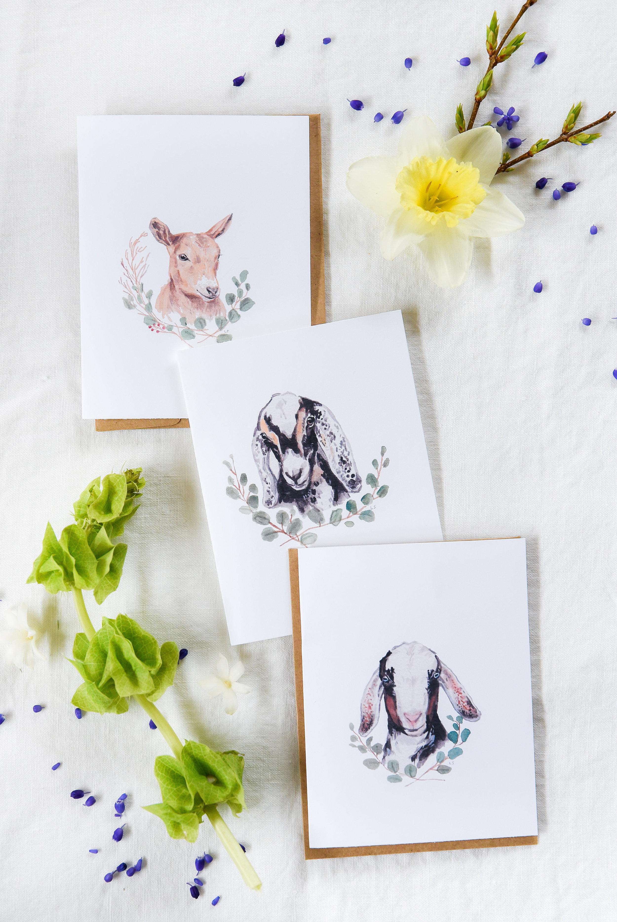 photograph about Printable Easter Cards named No cost Printable Goat Greeting Playing cards Boxwood Road