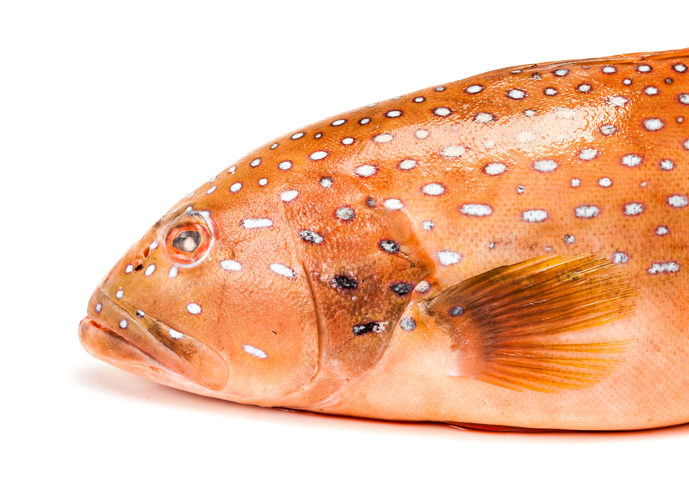 on-the-inlet-coral-trout.jpg