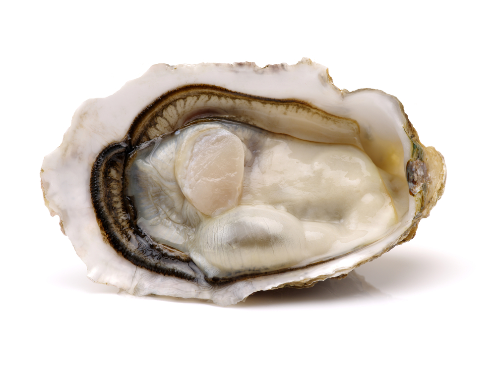 on-the-inlet-oysters.jpg