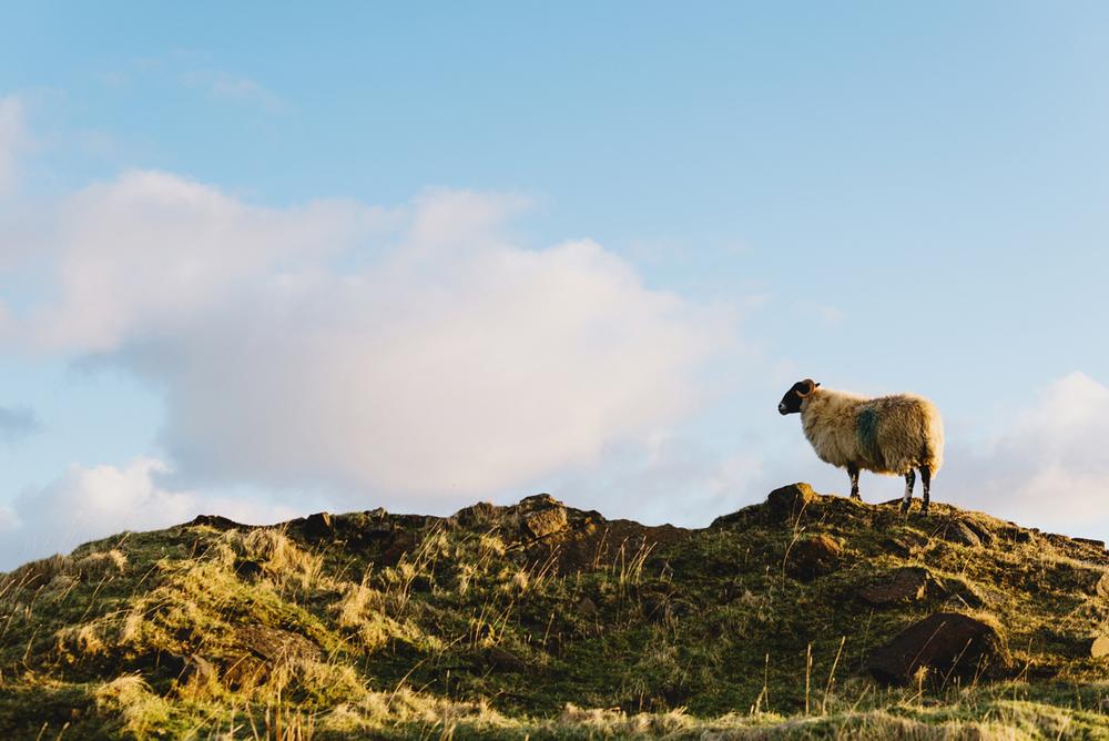 scotland24.jpg