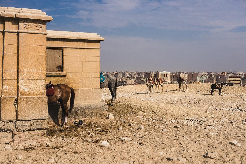 Egypt_0032.jpg