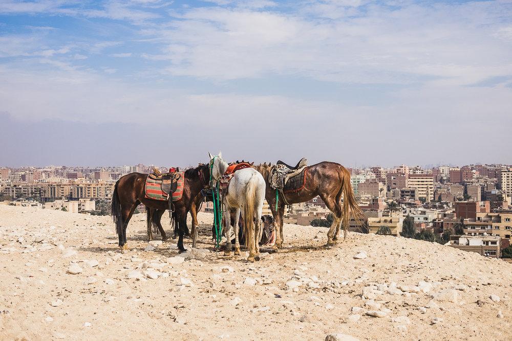 Egypt_0035.jpg