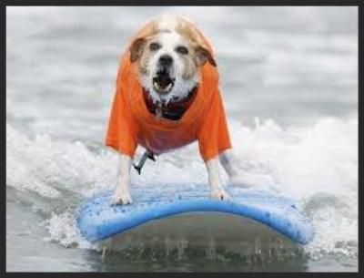 Beach Boys surf dog