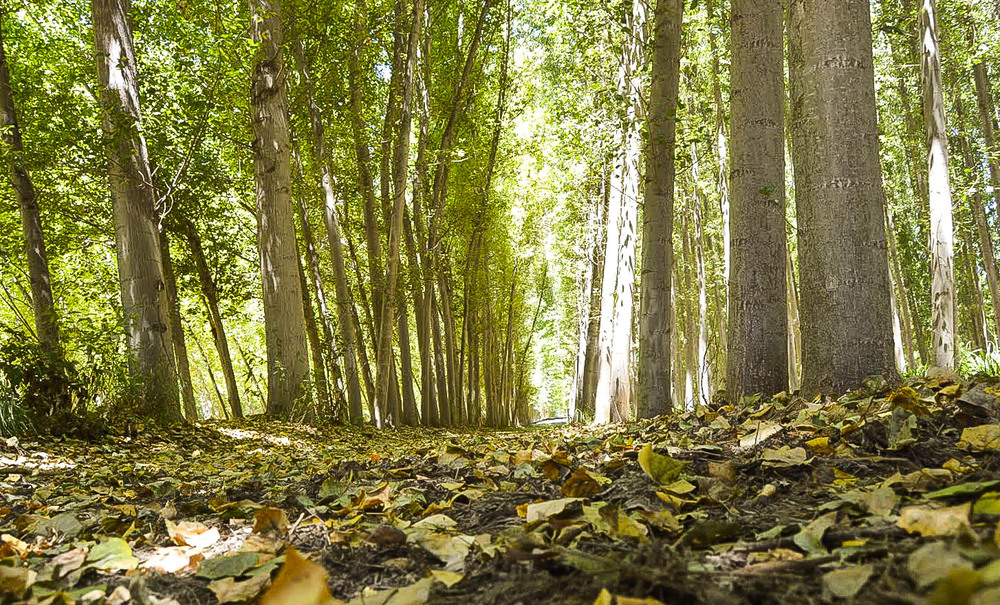 Granada forest