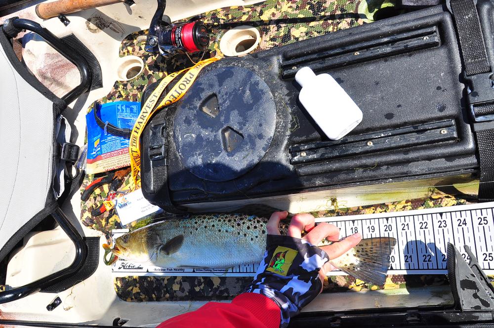 IFA trout 2.jpg