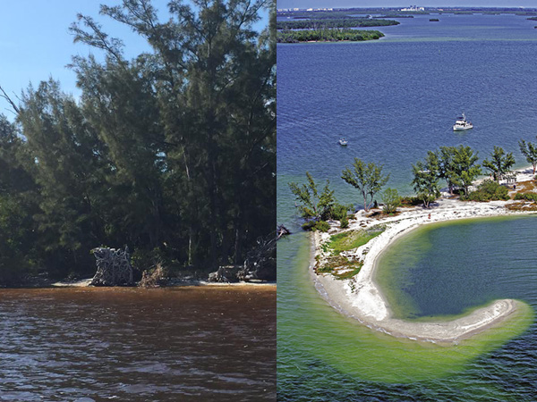Once a premier destination for local residents and tourists, picnic island is now plagued by polluted freshwater released from Lake Okeechobee.