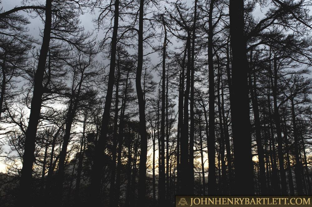 Disa_Park_&_Surroundings_By_John-henry_Bartlett-16.jpg