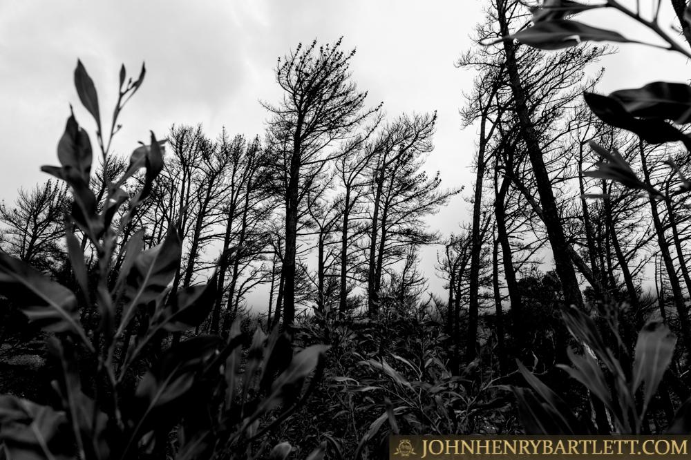Disa_Park_&_Surroundings_By_John-henry_Bartlett-999-001-3.jpg