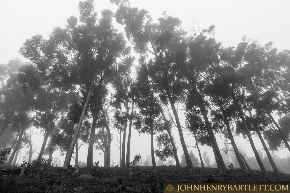 Disa_Park_&_Surroundings_By_John-henry_Bartlett-999-001-6.jpg