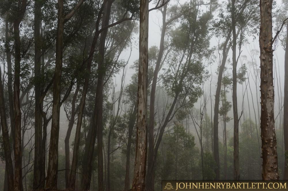 Disa_Park_&_Surroundings_By_John-henry_Bartlett-999-001-7.jpg
