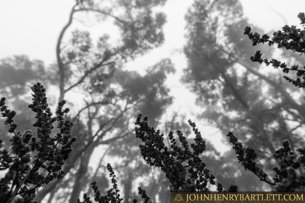 Disa_Park_&_Surroundings_By_John-henry_Bartlett-999-001-10.jpg