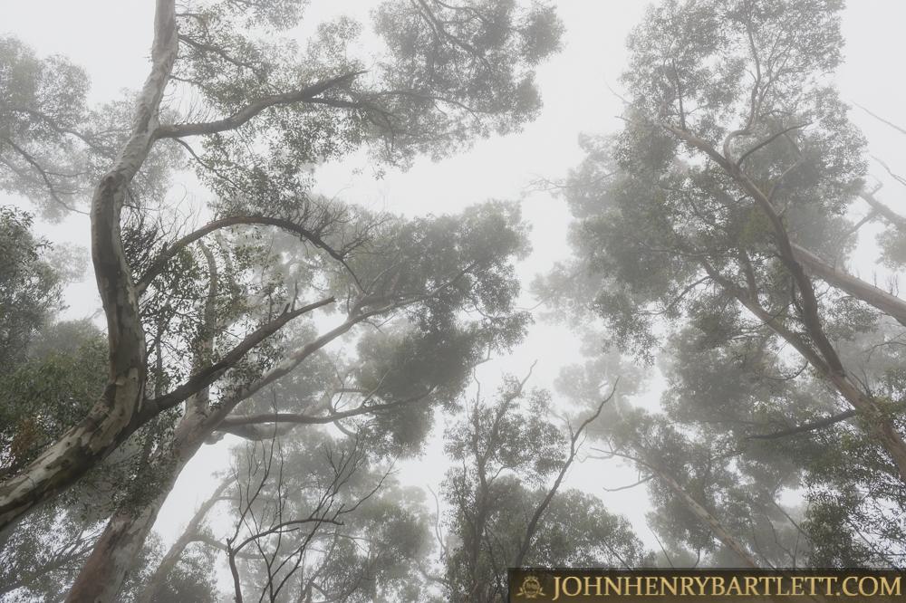 Disa_Park_&_Surroundings_By_John-henry_Bartlett-999-001-9.jpg