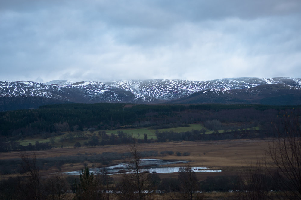 cairngorm view (1 of 1).jpg
